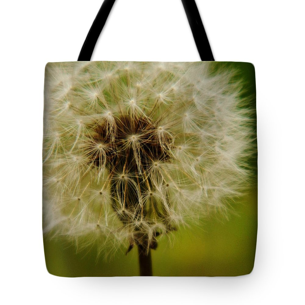 Dandelion Tote Bag featuring the photograph Dandelion by Andrea Anderegg