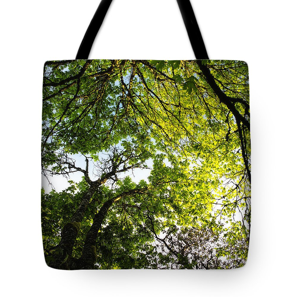 Trees Tote Bag featuring the photograph Daydreaming In The Hammock by Belinda Greb