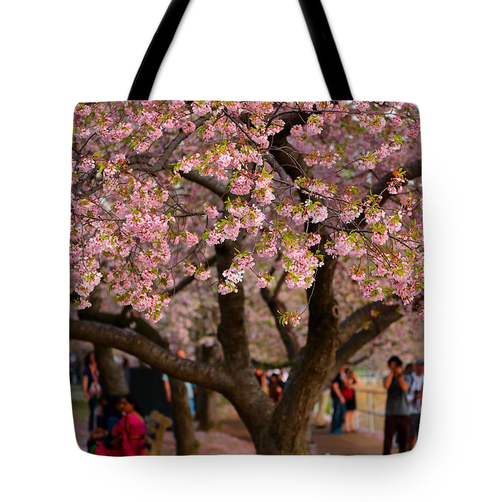 Tote Bag featuring the photograph Dc Cherry Blossom Tree by Scott Fracasso