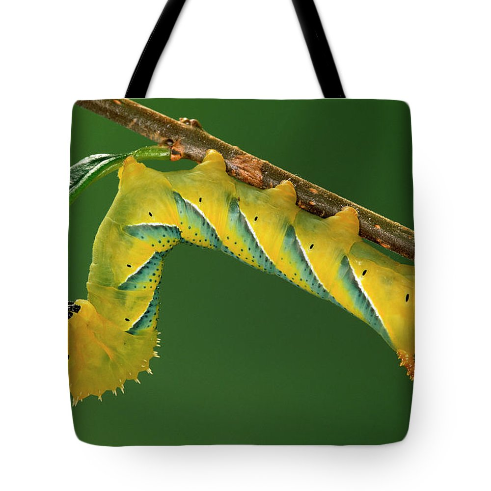 Fn Tote Bag featuring the photograph Deaths Head Hawk Moth by Ingo Arndt