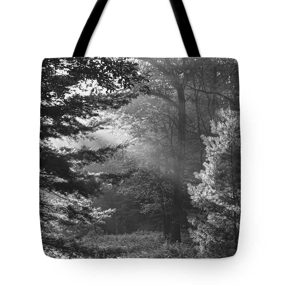 Forest Tote Bag featuring the photograph Deep In The Woods by Jeff Breiman