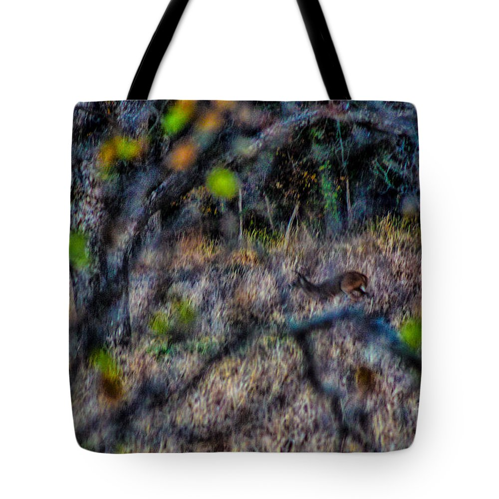 Deer Tote Bag featuring the photograph Deer A Doe A Female Deer by Toma Caul