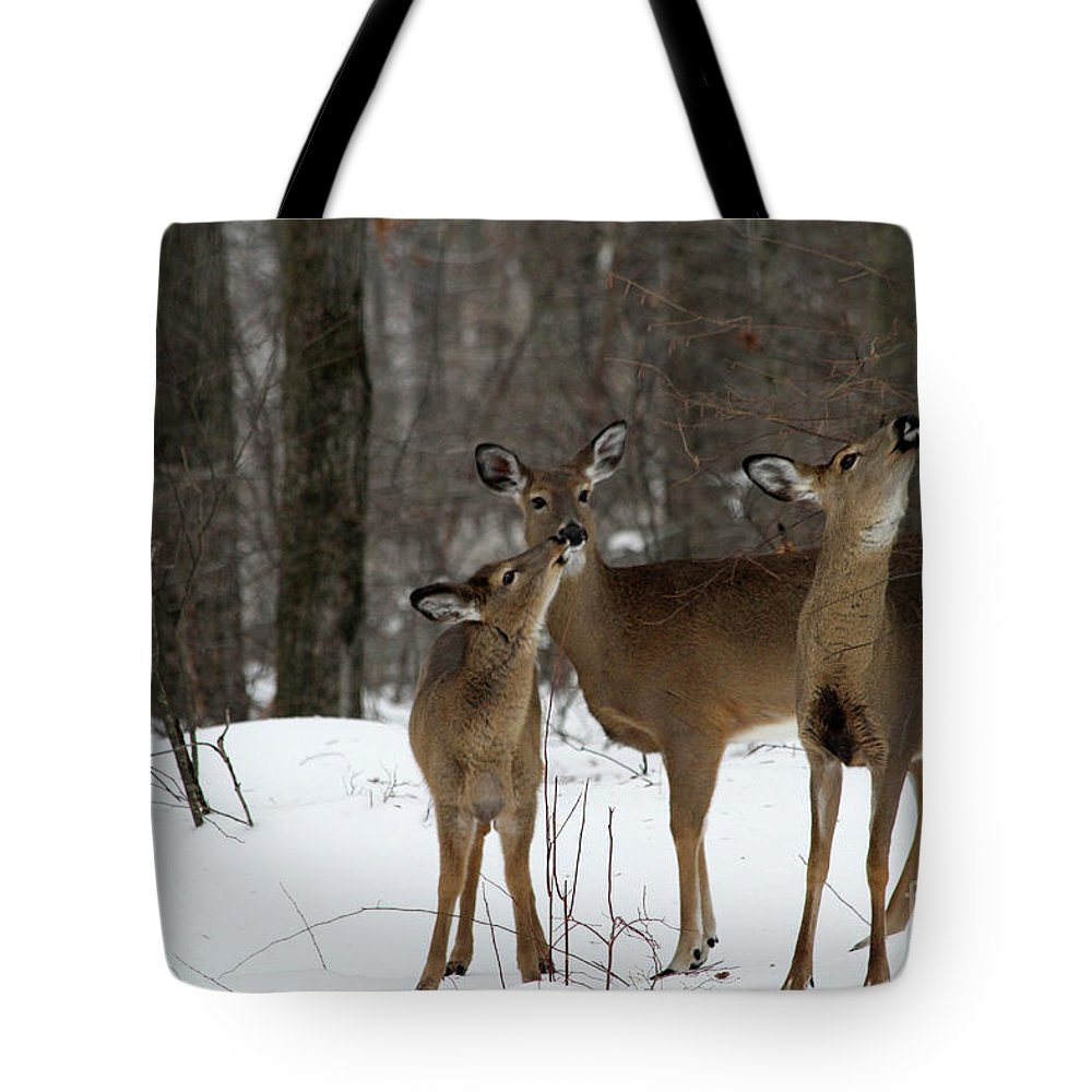 Deer Tote Bag featuring the photograph Deer Affection by Karol Livote