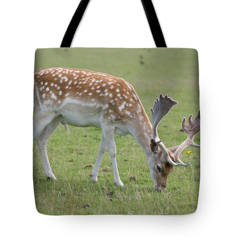 Deer Tote Bag featuring the photograph Deer Eating by Mark Severn