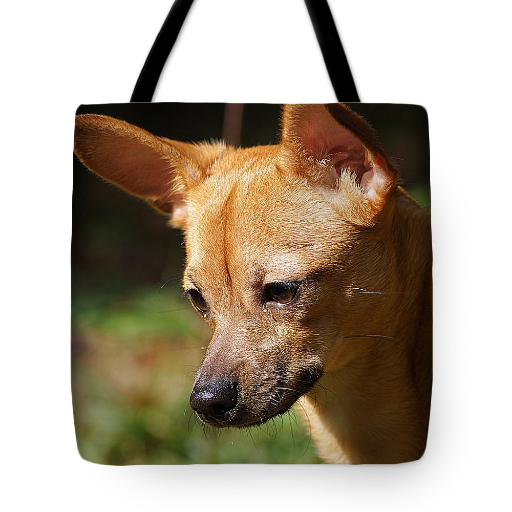 Dog Tote Bag featuring the photograph Deer-head Chihuahua by Paul Wilford