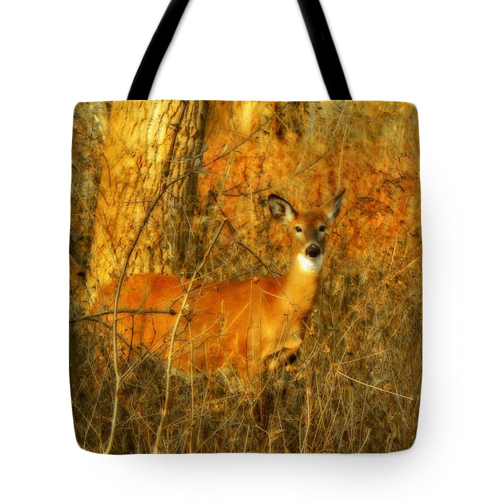 Animal Scene Tote Bag featuring the photograph Deer Spotted In A Golden Glowing Field by Gothicrow Images