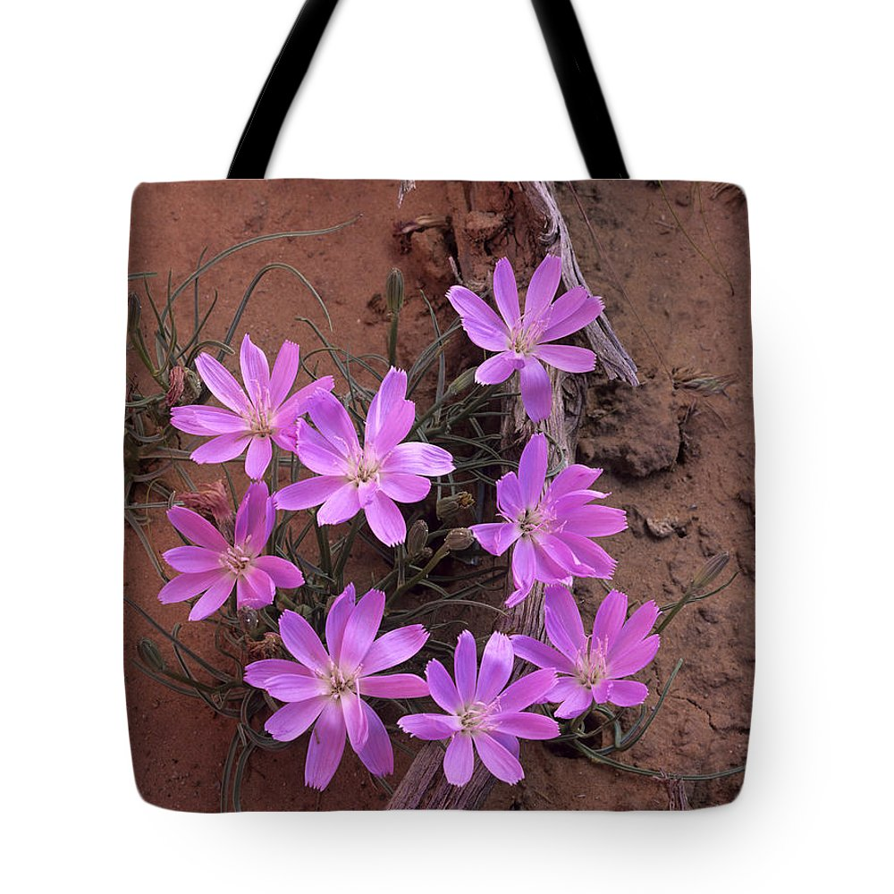 Blooming Tote Bag featuring the photograph Desert Chicory Rafinesquia Neomexicana by Tim Fitzharris