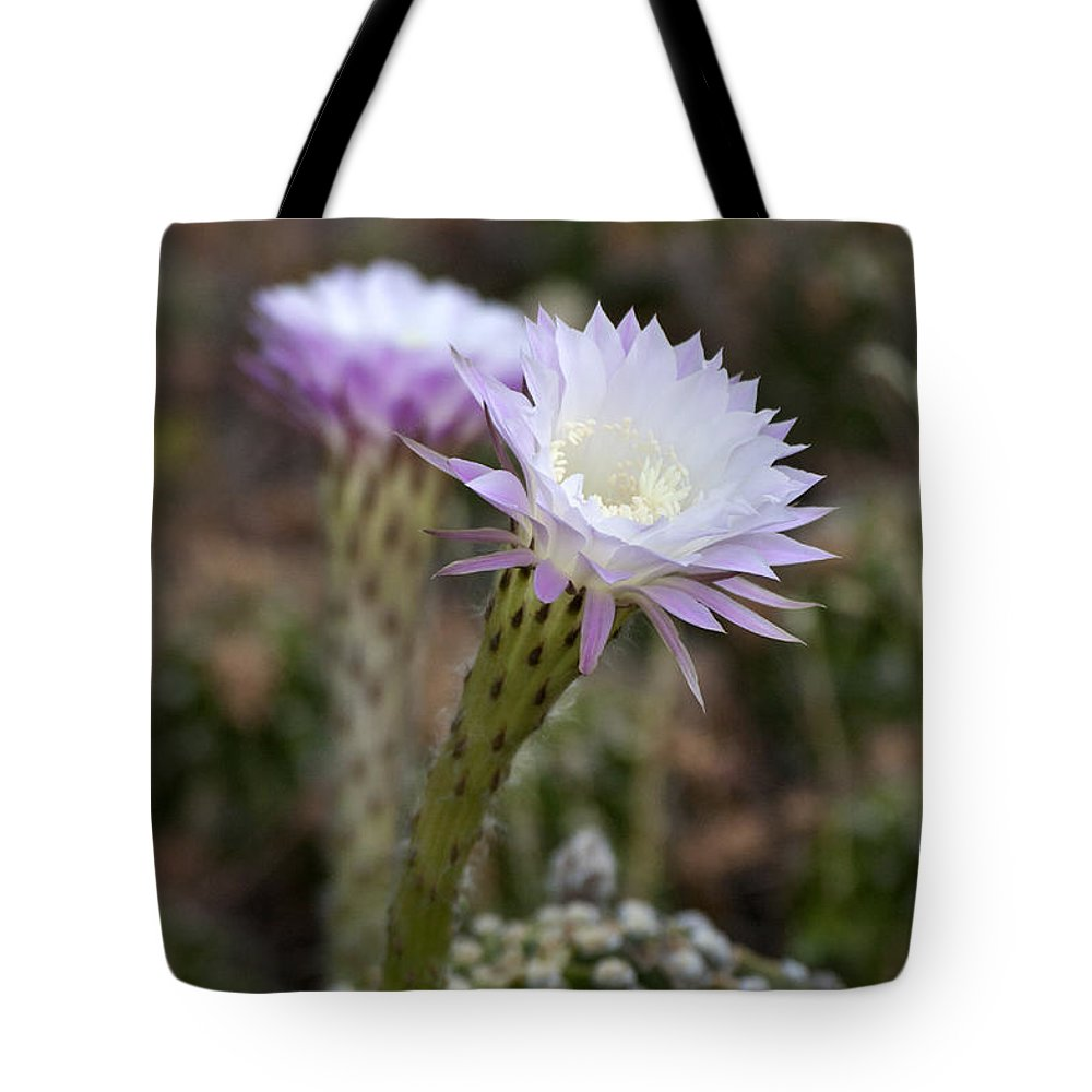 Cactus Tote Bag featuring the photograph Desert Song by Ruth Jolly