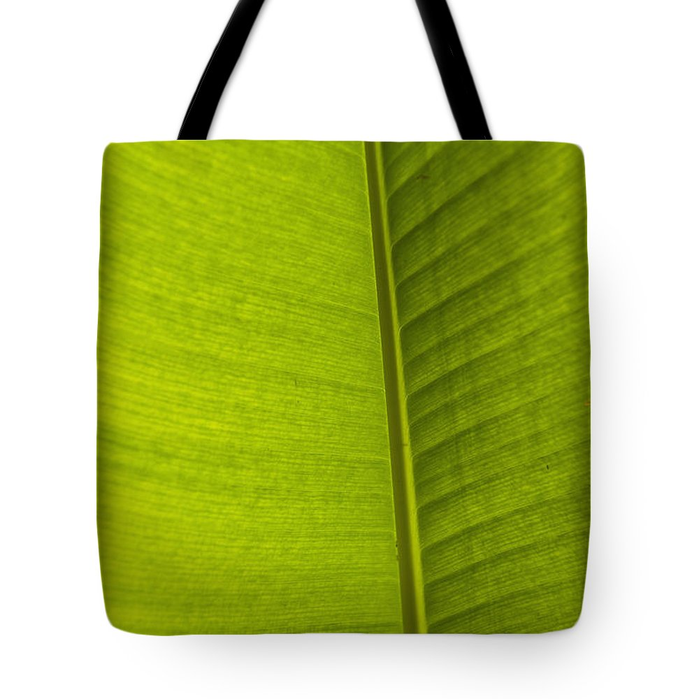 Cumming Tote Bag featuring the photograph Detail Of Banana Leaf Andromeda by Ian Cumming
