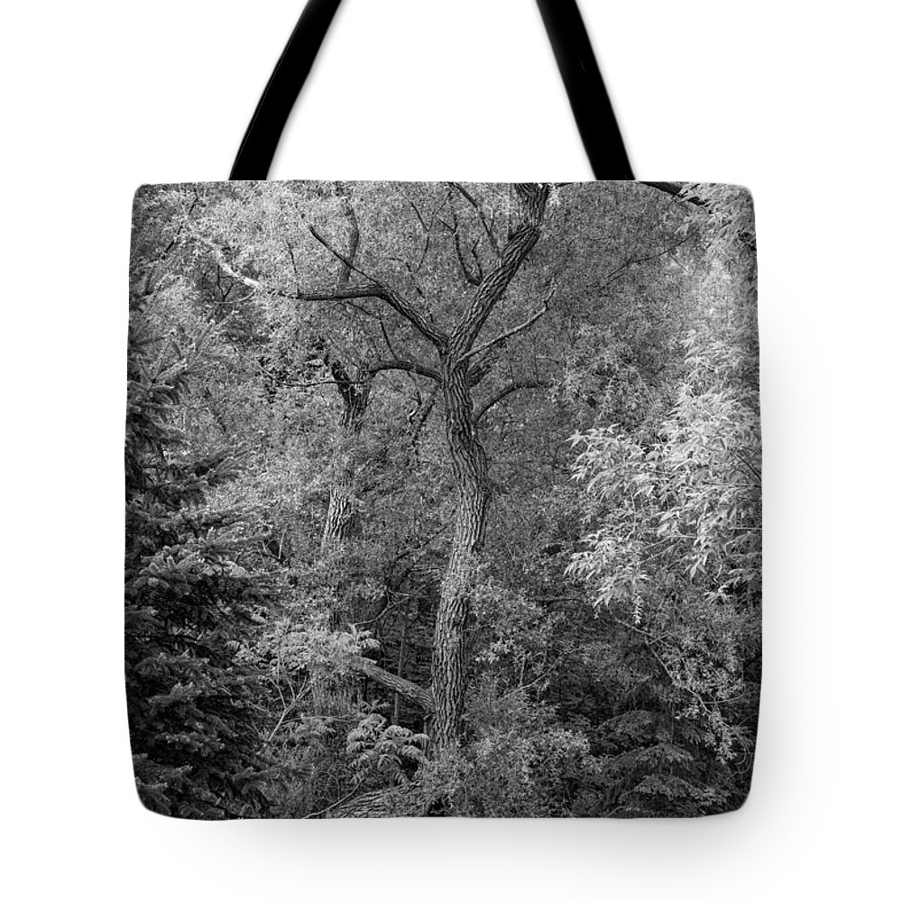 Bolton Tote Bag featuring the photograph Determination 2 Monochrome by Steve Harrington