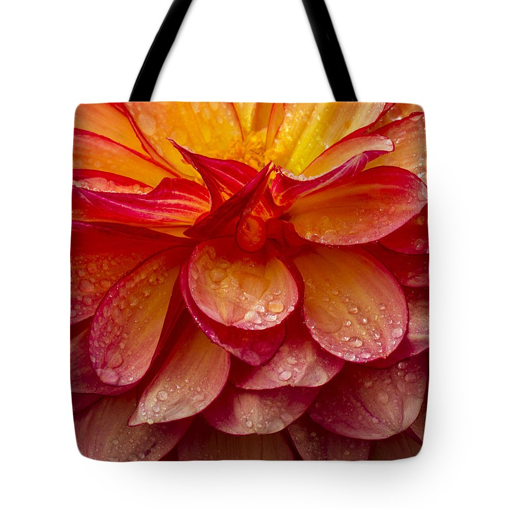 Dahlia Tote Bag featuring the photograph Dewy Dahlia by Jean Noren