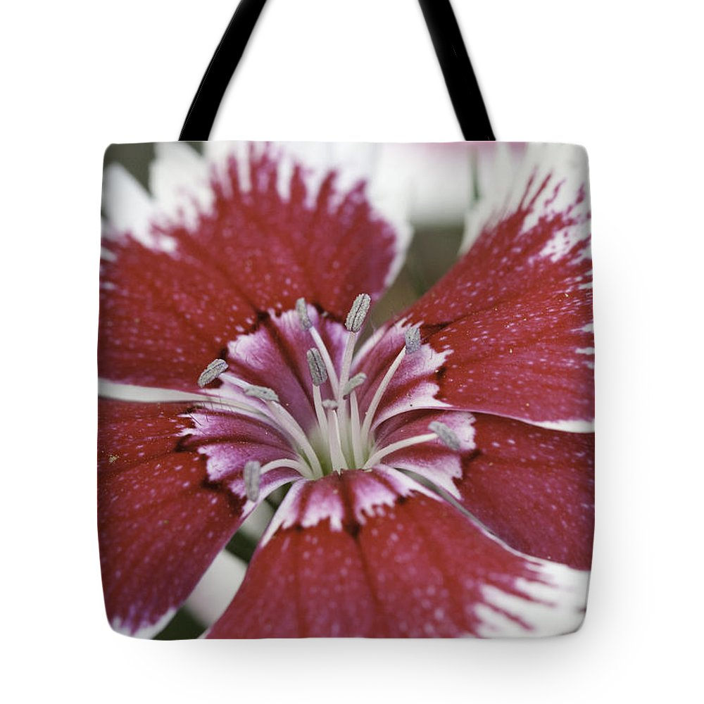 Flower Tote Bag featuring the photograph Dianthus by Tim Stanley