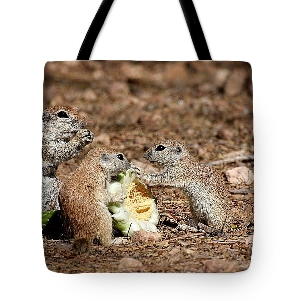 Squirrel Tote Bag featuring the photograph Dinner For Three by Ruth Jolly
