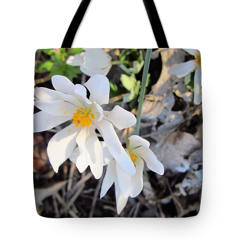 Nature Tote Bag featuring the photograph Discovery In The Woods by Cynthia Clark