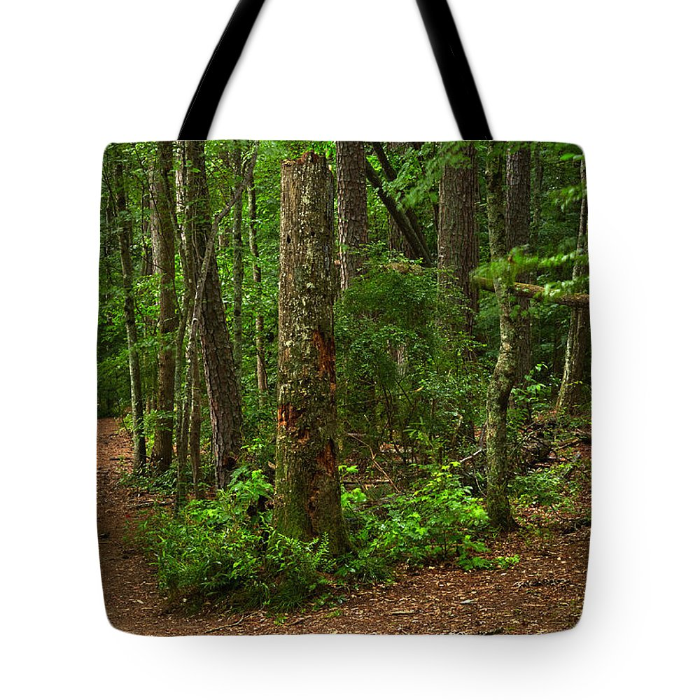 Landscapes Tote Bag featuring the photograph Diverted Paths by Matthew Pace