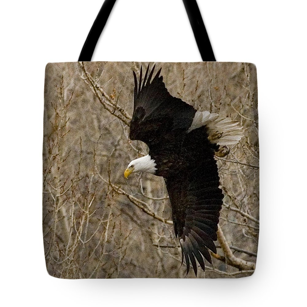 Bird Tote Bag featuring the photograph Diving Eagle by J L Woody Wooden