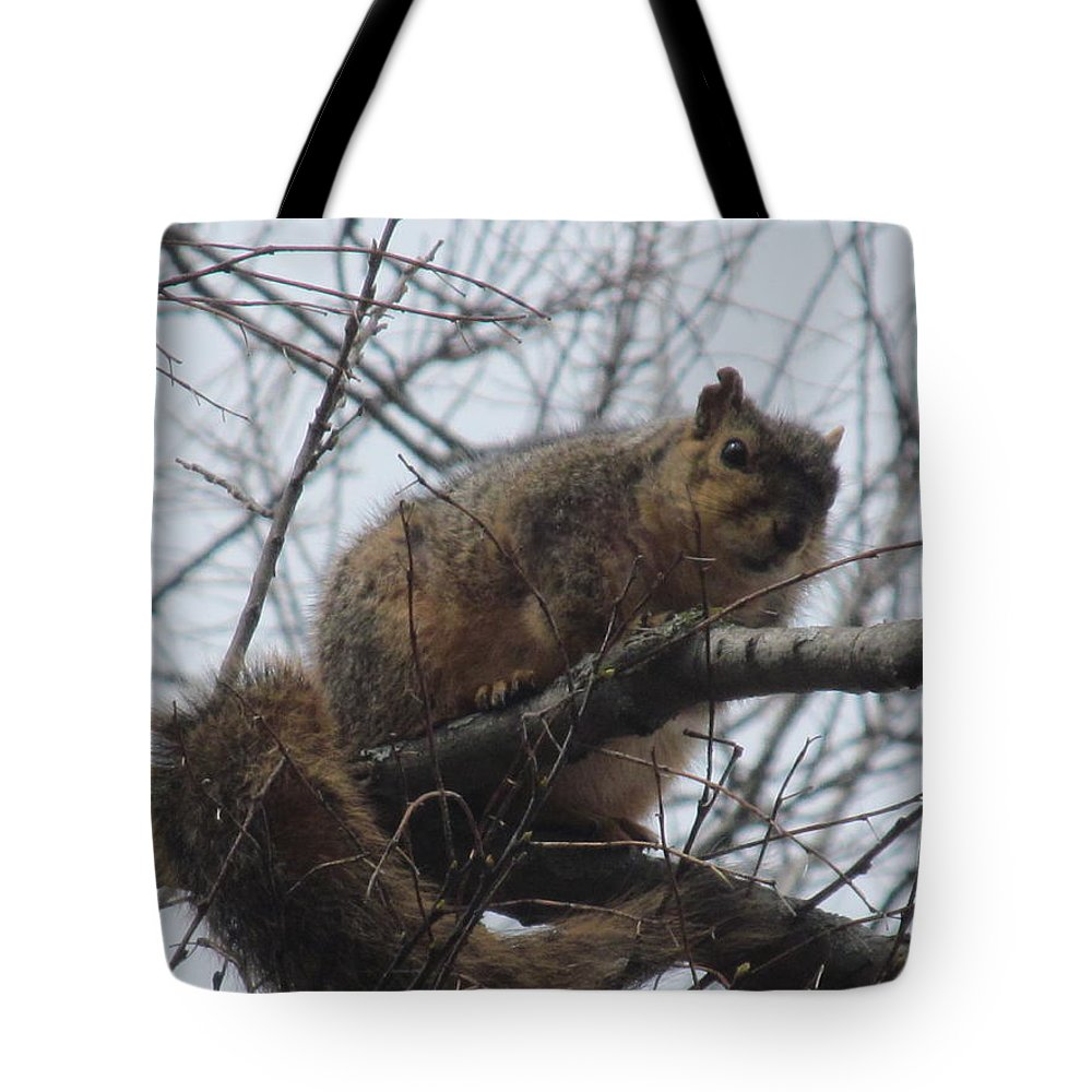 Squirrel Tote Bag featuring the photograph Do Not Fall by Tina M Wenger