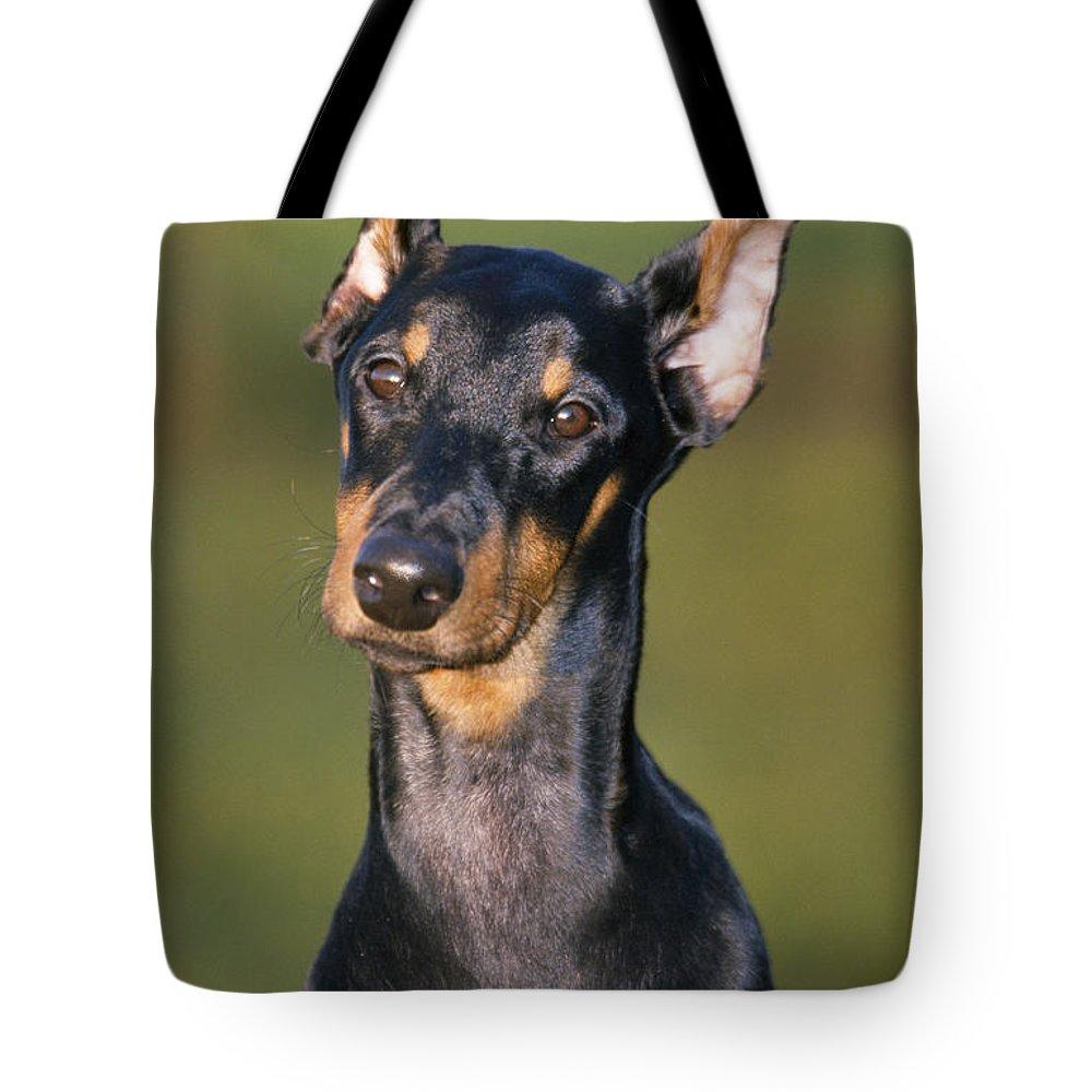 Doberman Tote Bag featuring the photograph Doberman Pinscher Dog by Johan De Meester
