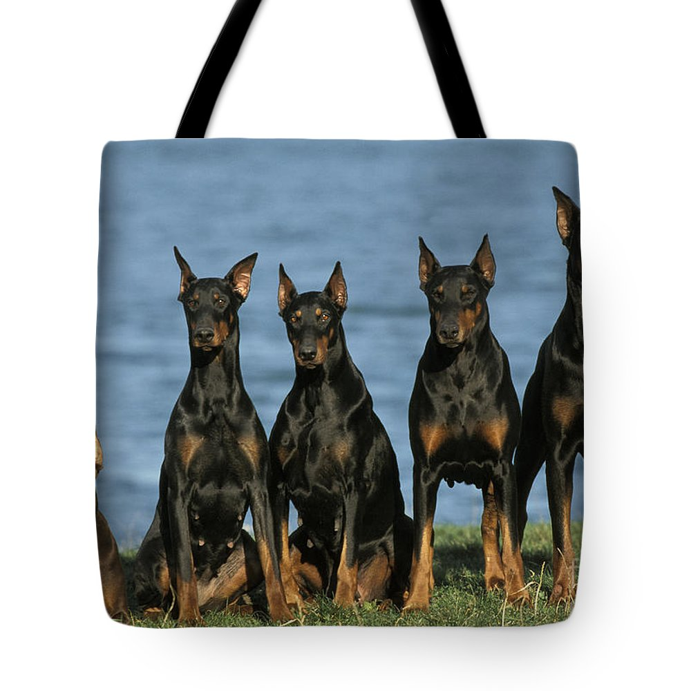 Doberman Pinscher Tote Bag featuring the photograph Doberman Pinschers by Jean-Michel Labat