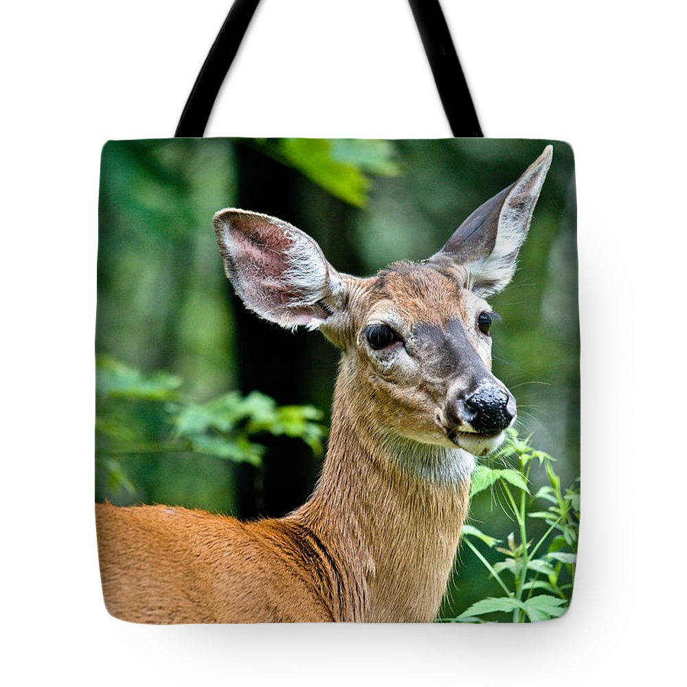 Deer Tote Bag featuring the photograph Doe Close by Cheryl Baxter