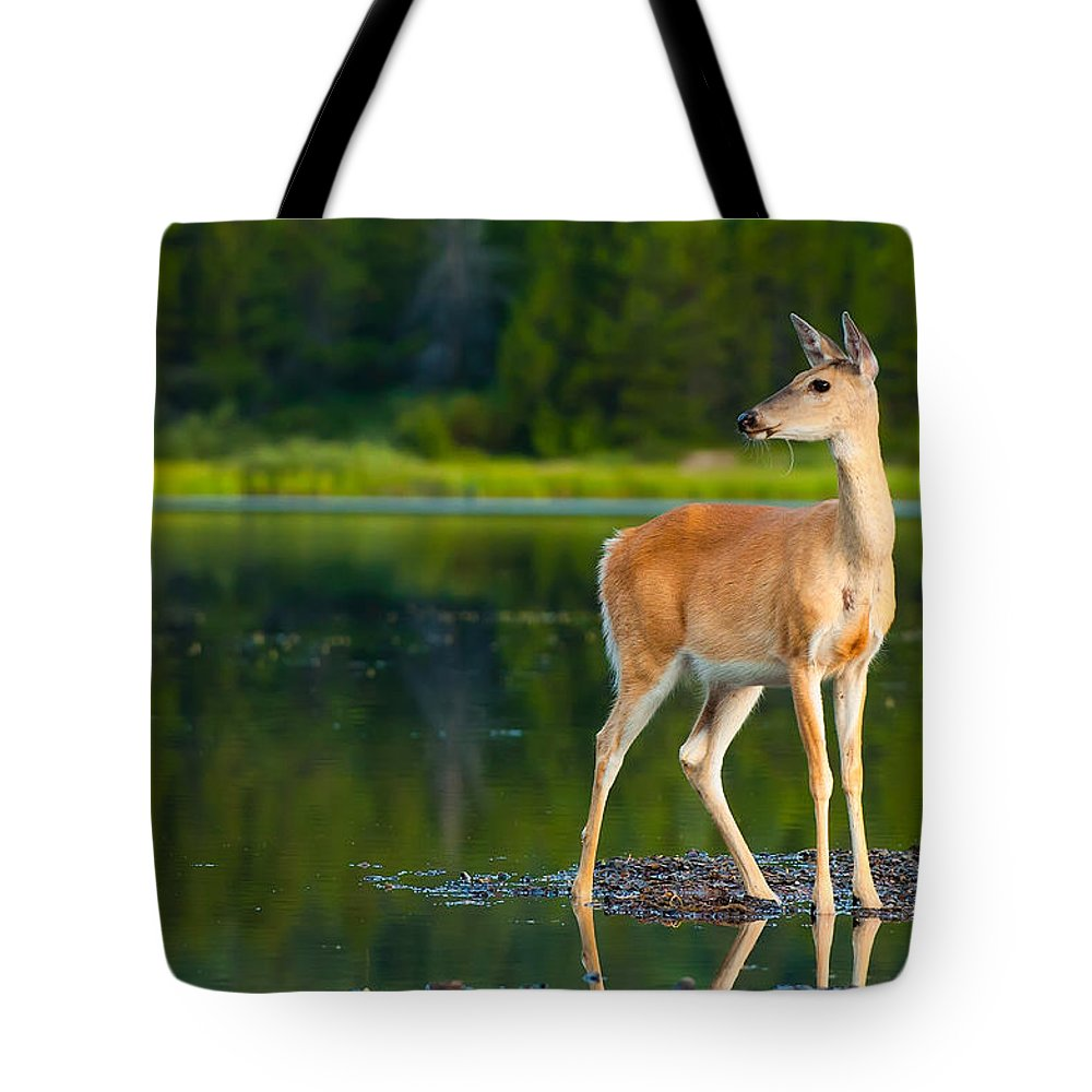 Animal Tote Bag featuring the photograph Doe by Sebastian Musial