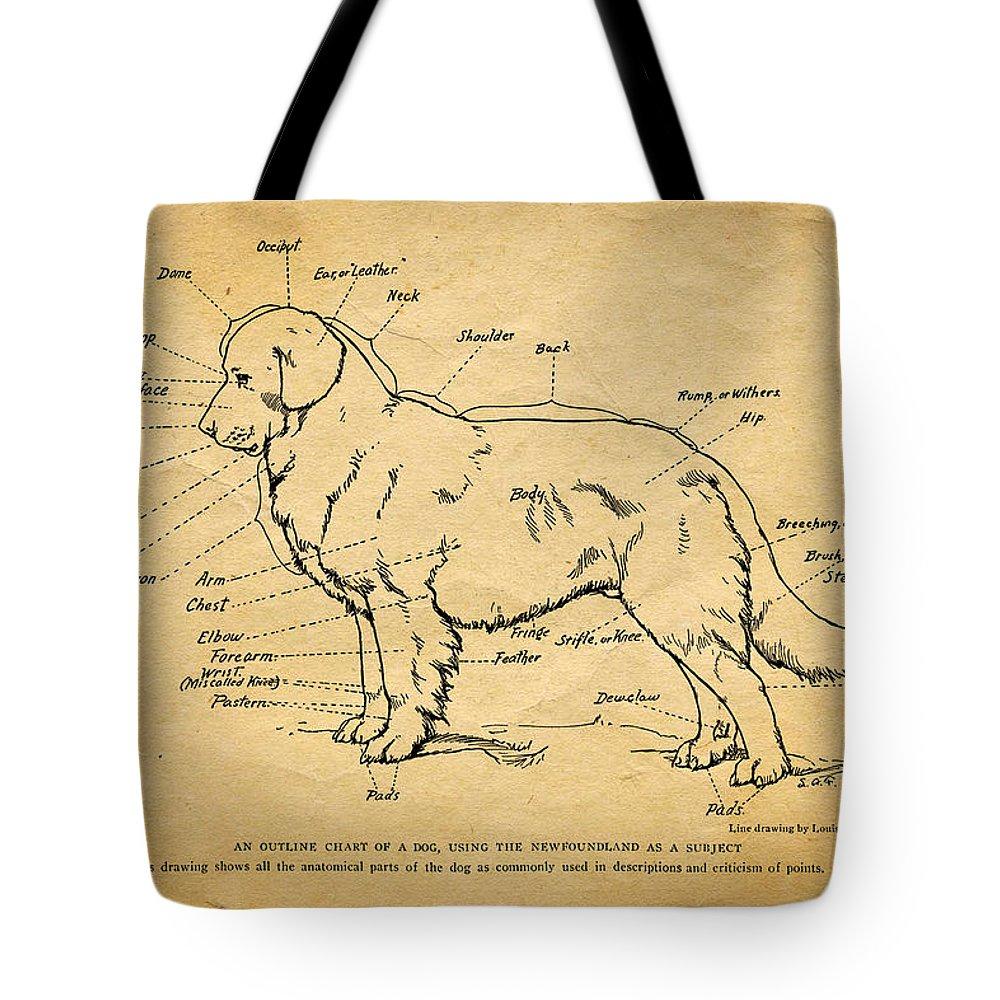 Dog Anatomy Tote Bags | Fine Art America