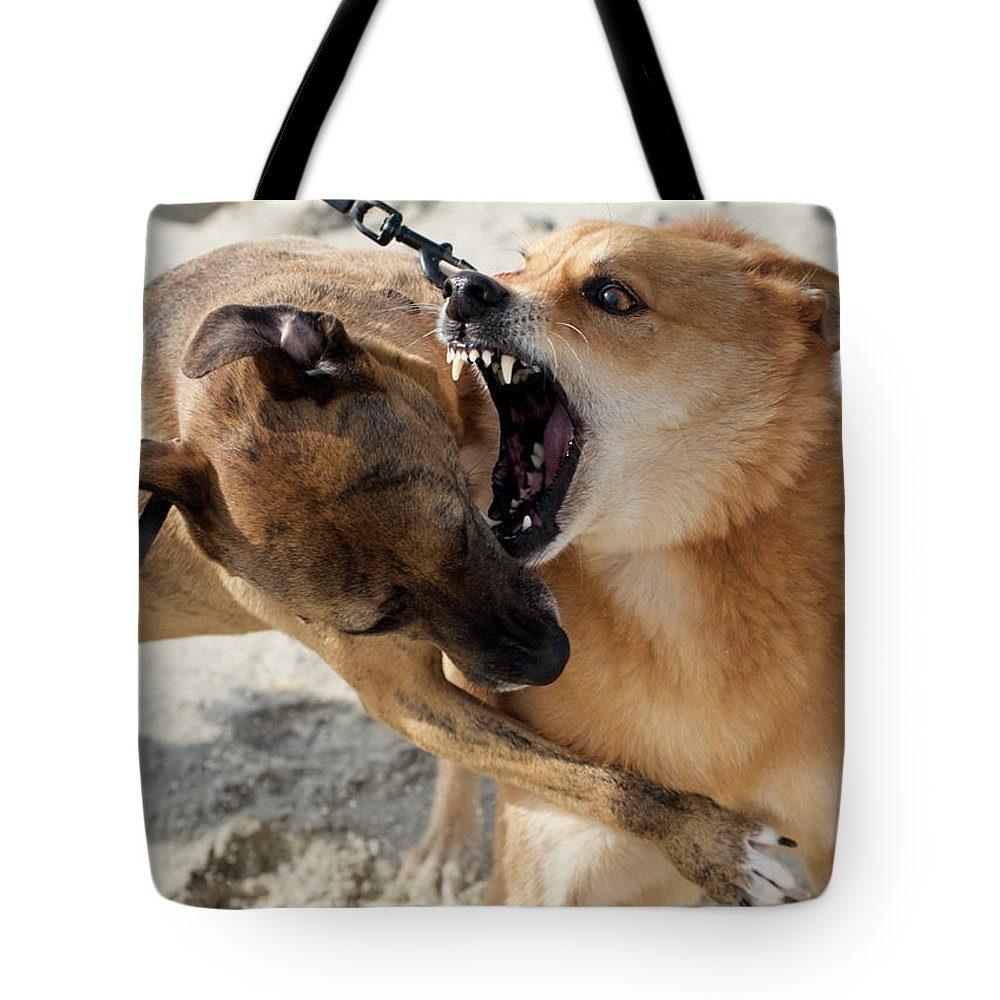 Aggression Tote Bag featuring the photograph Dogs Fight On The Beach In Emerald by David Zentz