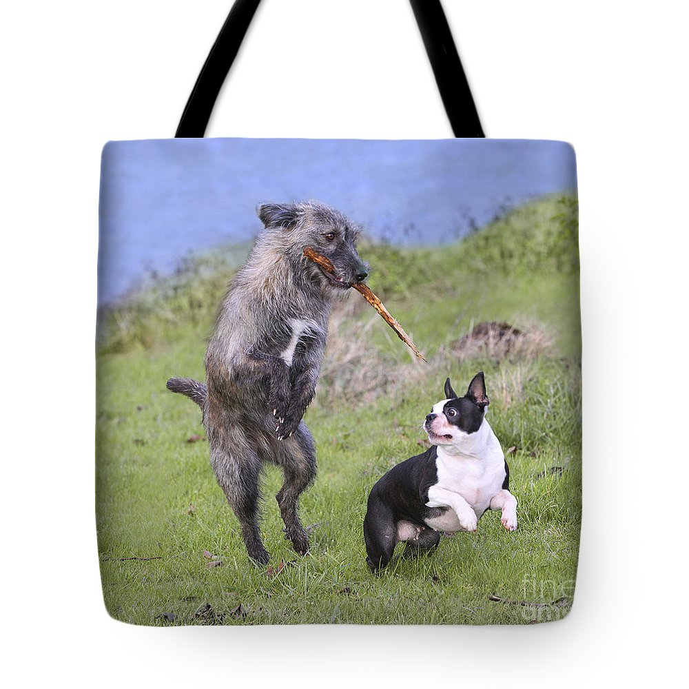 Boston Terrier Tote Bag featuring the photograph Dogs Playing With Stick by Jean-Michel Labat