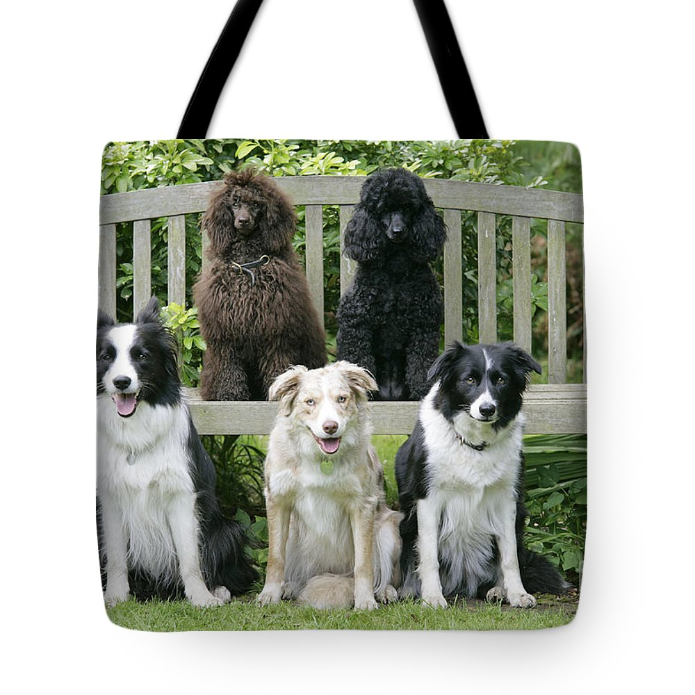 Dogs Tote Bag featuring the photograph Dogs Sitting On Bench by John Daniels