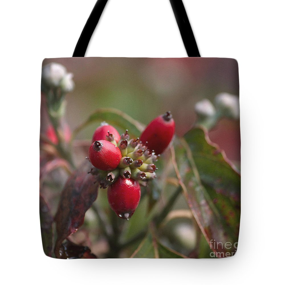 Dogwood Berries Tote Bag featuring the photograph Dogwood Berries by Luv Photography