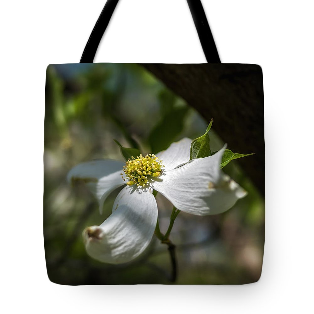 Fa 31 Tote Bag featuring the photograph Dogwood Bloom In Shadows by Lori Coleman