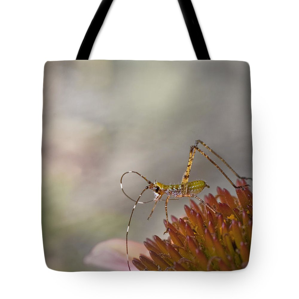 Katydid Tote Bag featuring the photograph Doin' The Twist by David and Carol Kelly