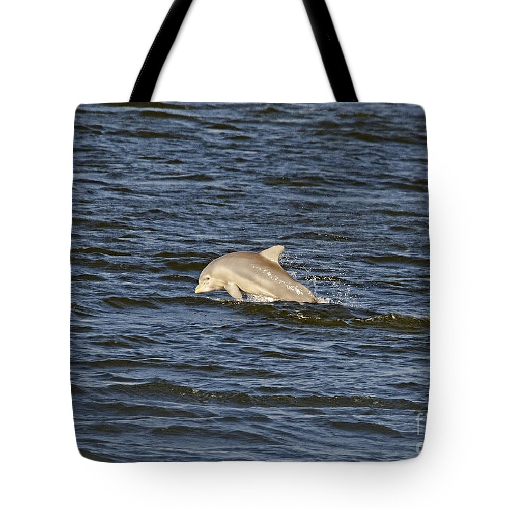 Tote Bag featuring the photograph Dolphin At Sea by TJ Baccari