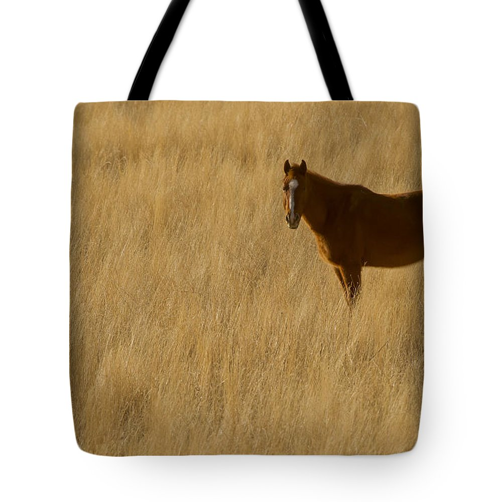 Horse Tote Bag featuring the photograph Domestic Horse  #5332 by J L Woody Wooden