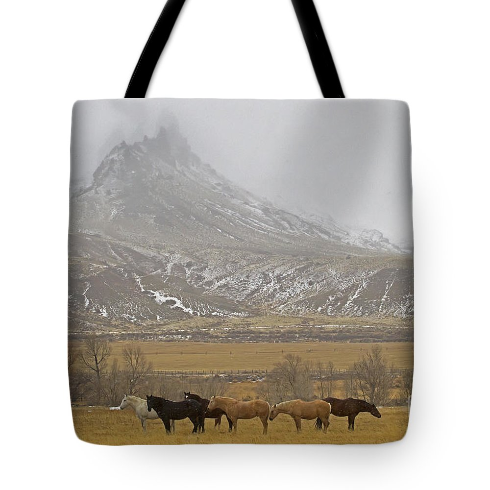 Horses Tote Bag featuring the photograph Domestic Horses  #2645 by J L Woody Wooden