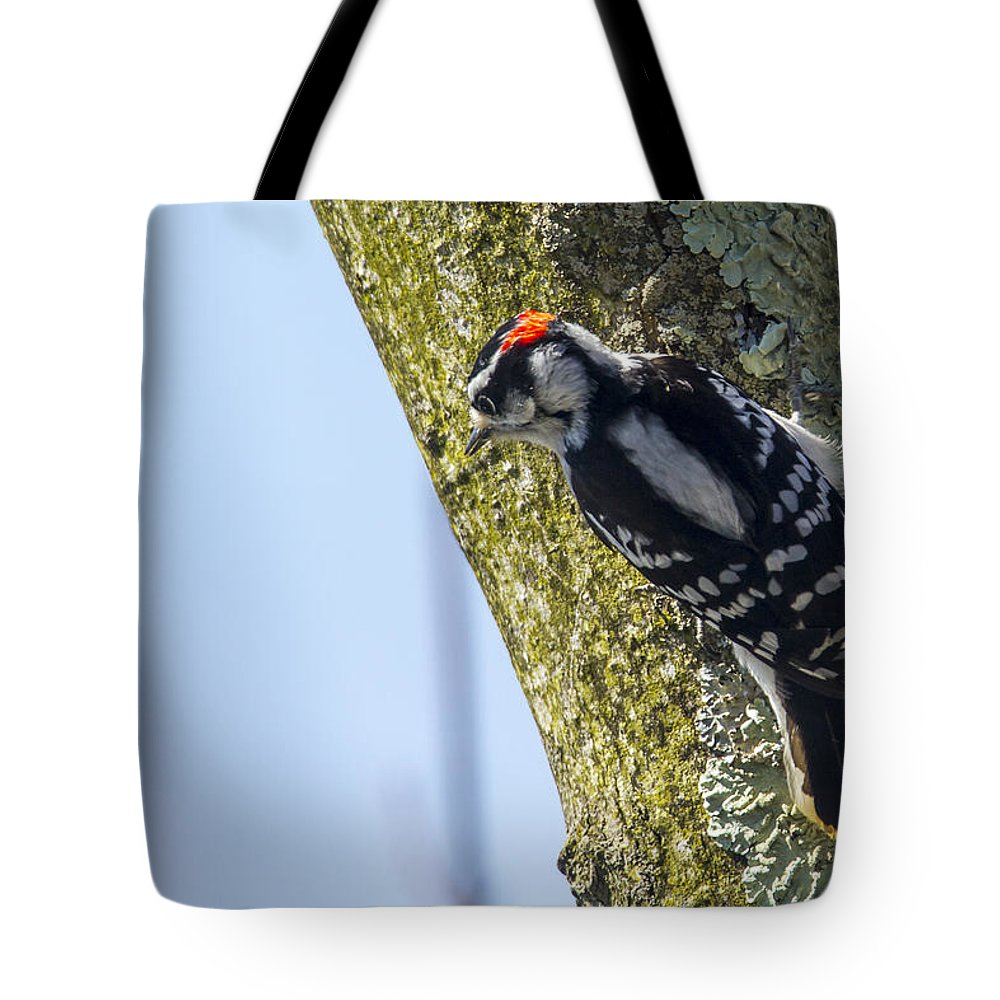400-05143253 Tote Bag featuring the photograph Downy Woodpecker - Male by Jack R Perry