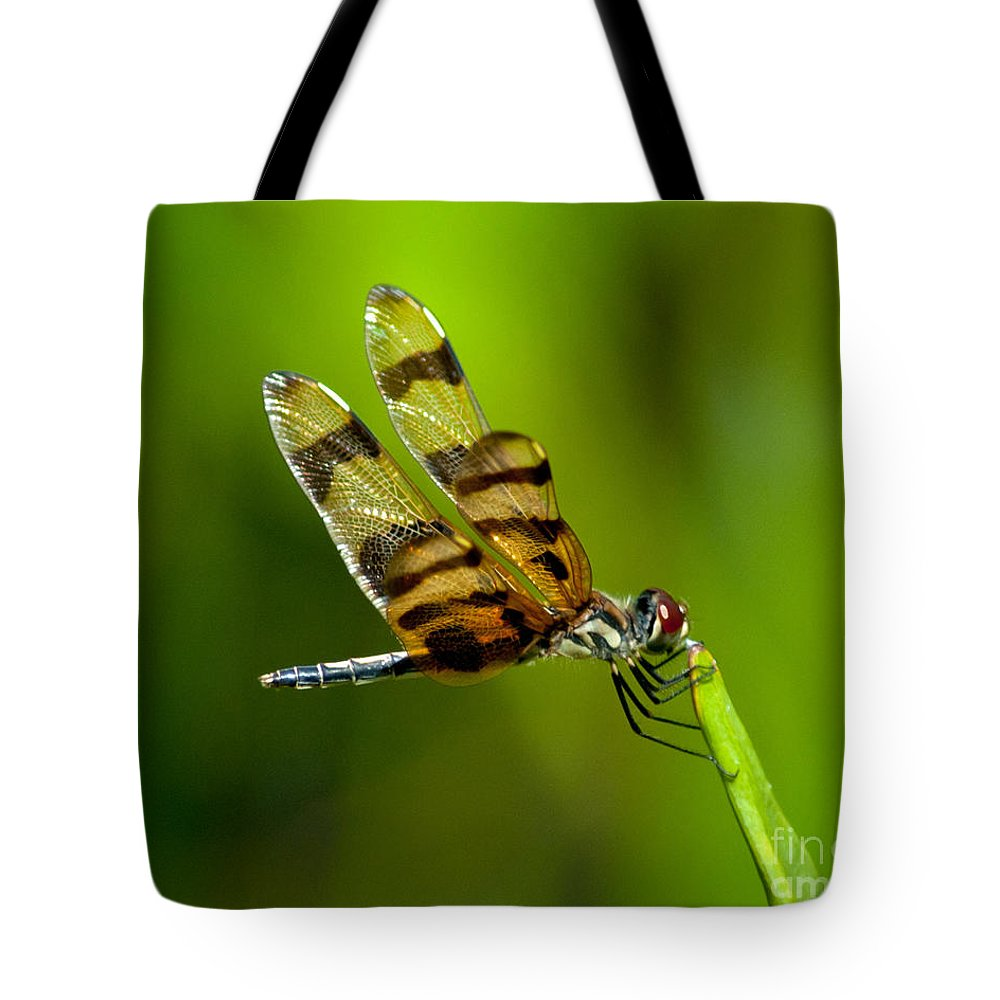 Dragonfly Tote Bag featuring the photograph Dragonfly Eating by Stephen Whalen