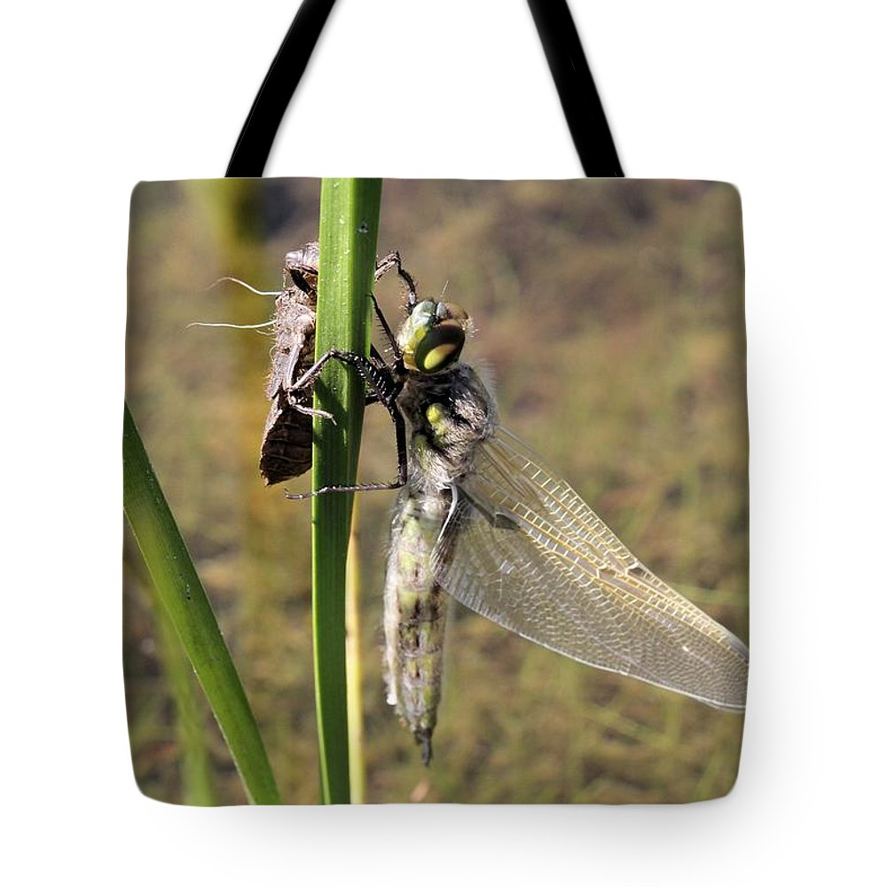 Four-spotted Skimmer Tote Bag featuring the photograph Dragonfly Newly Emerged - Second In Series by Doris Potter