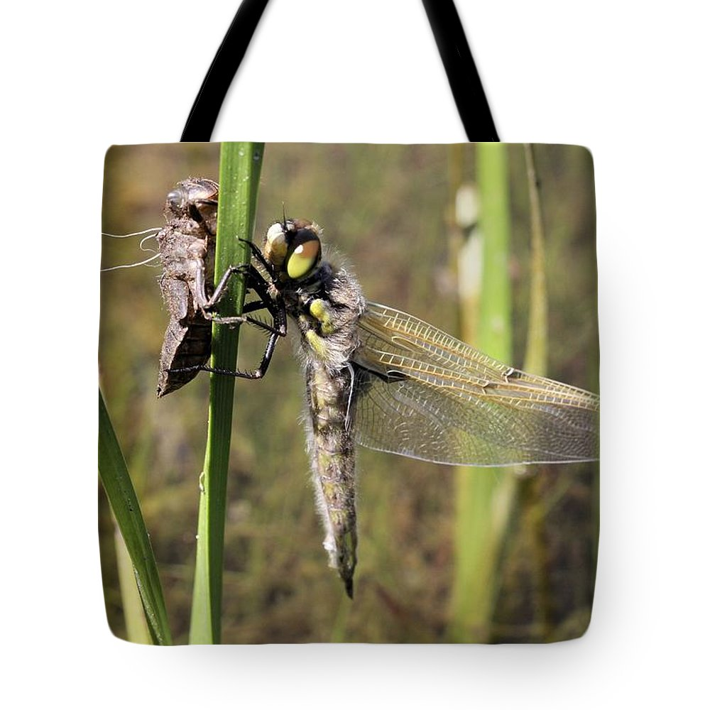 Four-spotted Skimmer Tote Bag featuring the photograph Dragonfly Newly Emerged - Third In Series by Doris Potter