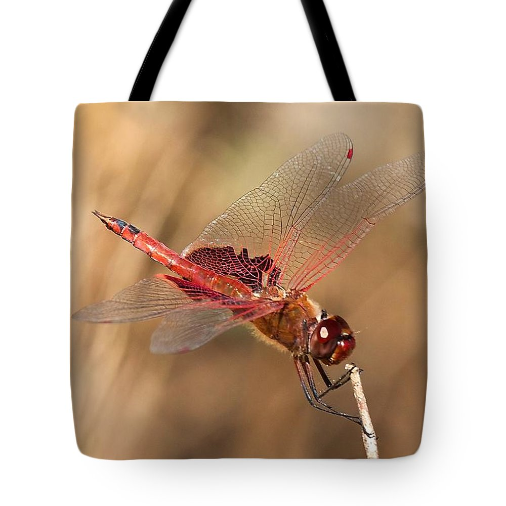 Dragonfly Tote Bag featuring the photograph Dragonfly by Stuart Litoff