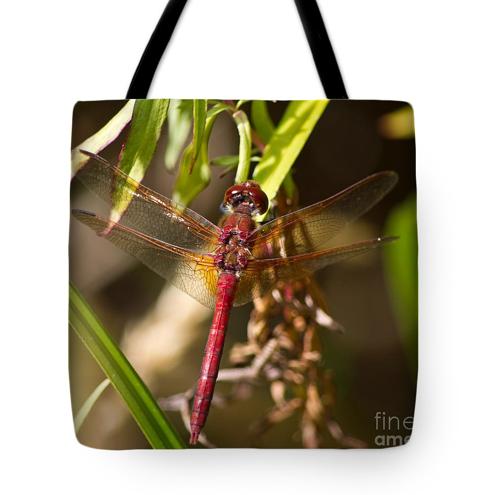 Animal Tote Bag featuring the photograph Dragonfly Wings by Adria Trail