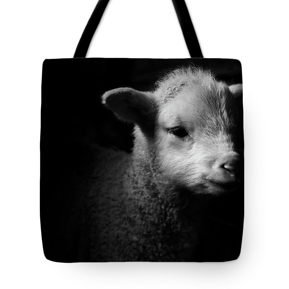 Animal Themes Tote Bag featuring the photograph Dramatic Lamb Black & White by Michael Neil O'donnell