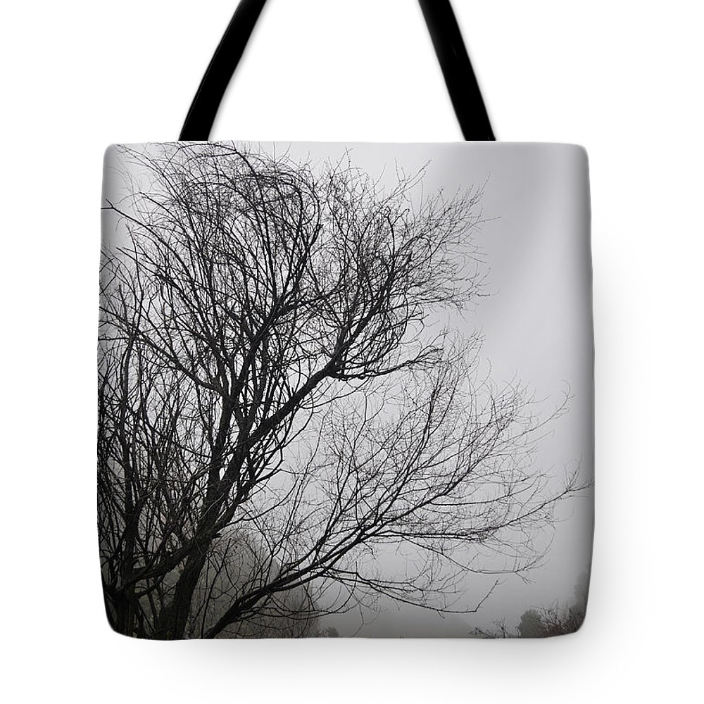 Trees Tote Bag featuring the photograph Dreamer Tree by Guido Montanes Castillo