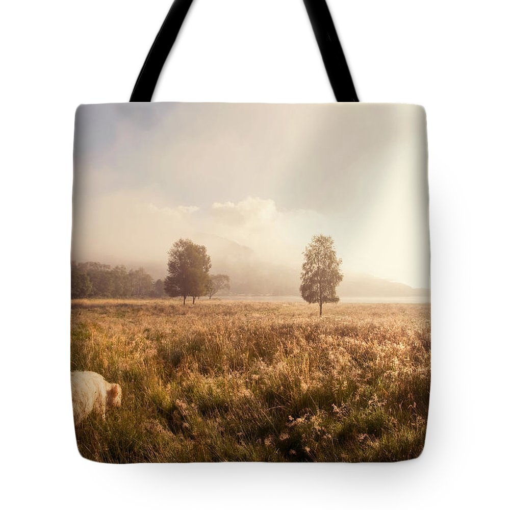 Jenny Rainbow Fine Art Photography Tote Bag featuring the photograph Dreamy Fields. The Trossachs. Scotland by Jenny Rainbow