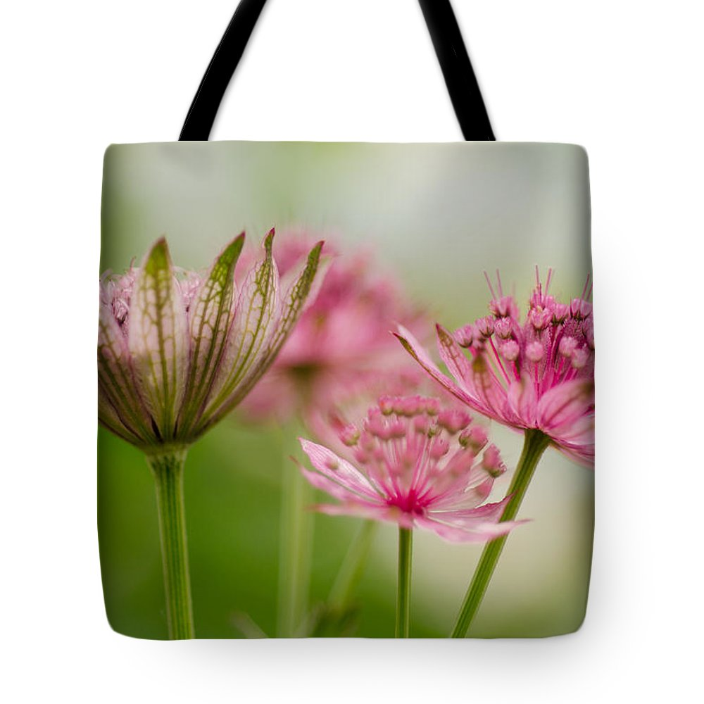 Background Tote Bag featuring the photograph Dreamy by TouTouke A Y