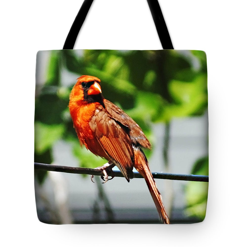 Cardinal Tote Bag featuring the photograph Dressed In Red by Lizi Beard-Ward