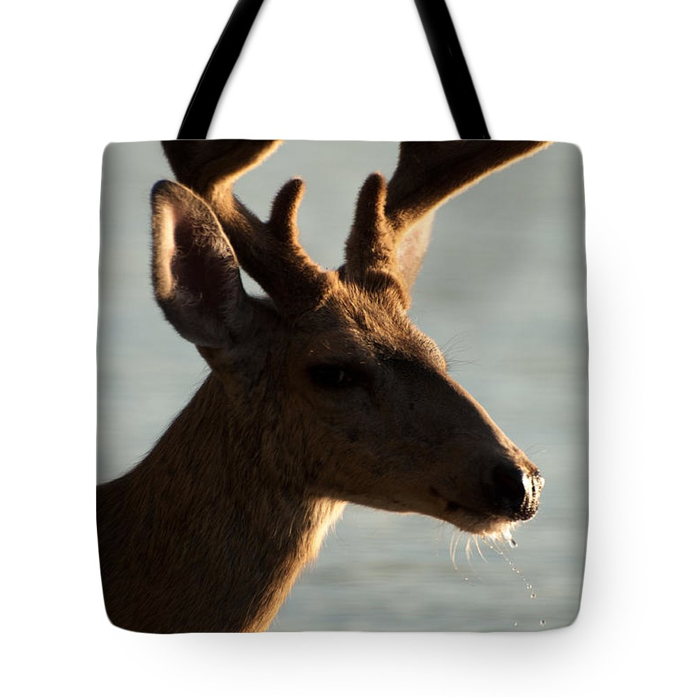 Drooling Tote Bag featuring the photograph Drooler by Bruce Gourley