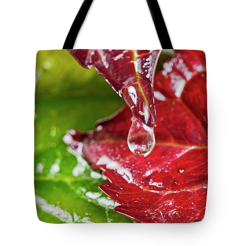 North Rhine Westphalia Tote Bag featuring the photograph Drops On Colorful Foliage In Autumn by Georg Hanf