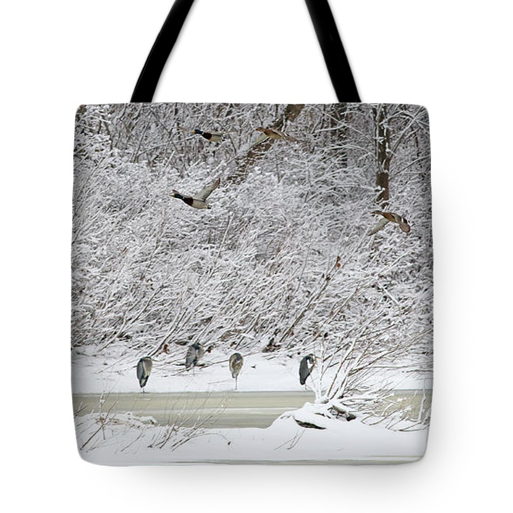 Ducks Tote Bag featuring the photograph Duck Fly Over Herons On Maumee River by Jack Schultz