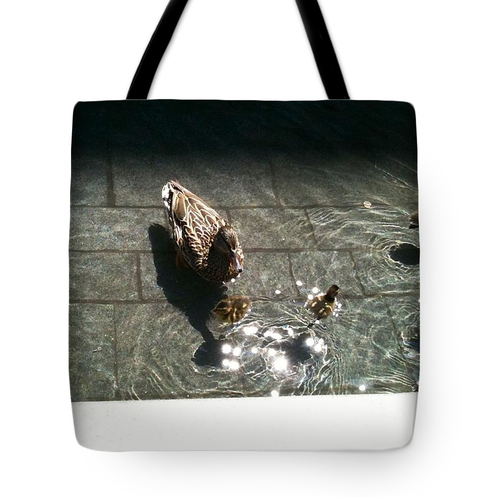 Duck Tote Bag featuring the photograph Ducks At The American Indian Museum by Lois Ivancin Tavaf